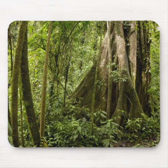 Cloud forest, Bosque de Paz, Costa Rica Mouse Mat