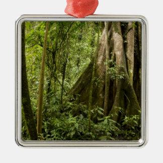Cloud forest, Bosque de Paz, Costa Rica Silver-Colored Square Decoration