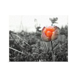 Cloudberry edited photography canvas print