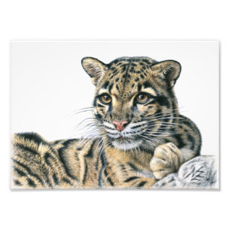 Clouded leopard - Nebelparder Photo Art