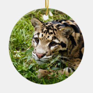 clouded leopard waiting for mom and love christmas ornament