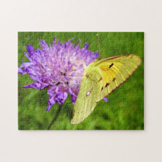 Clouded Yellow Butterfly Photo Puzzle and Gift Box