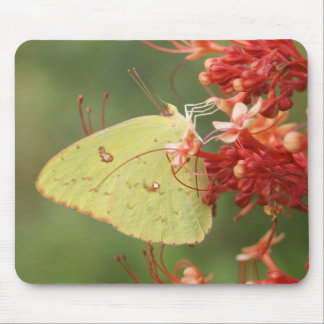 Cloudless Sulphur Butterfly Mouse Mat