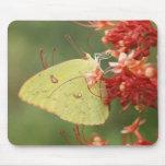 Cloudless Sulphur Butterfly Mouse Mats