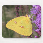 Cloudless Sulphur Butterfly Mouse Pads
