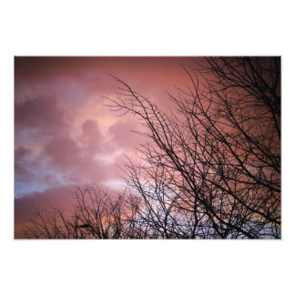 Clouds and Branches Satin Quality Kodak Print Photo Art