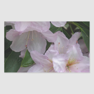 Cloudy Day  Rhododendruon Blossoms Rectangular Sticker