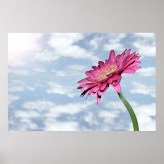 cloudy pink chrysanthemum poster