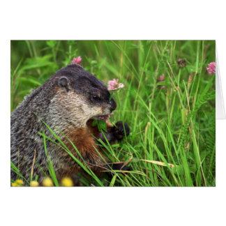 Clover-eating Groundhog Card