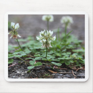 Clover on a tared road. mouse pad