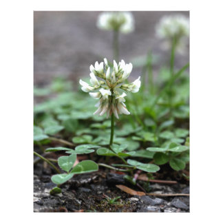 Clover on a tared road. personalised letterhead