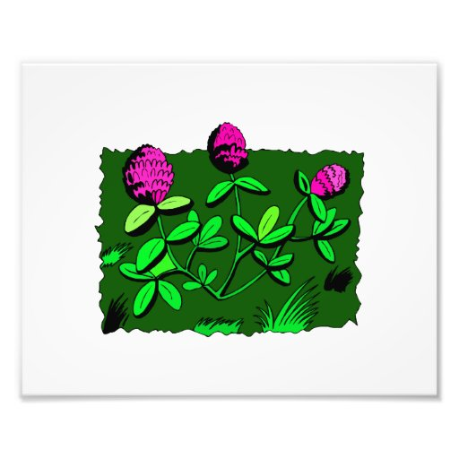 Clover plant graphic design.png art photo