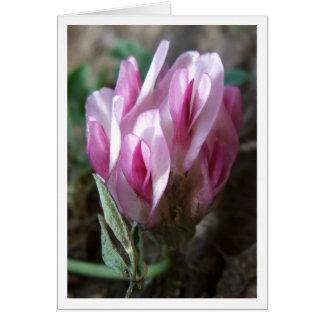 Clover - Rocky Mountains Card