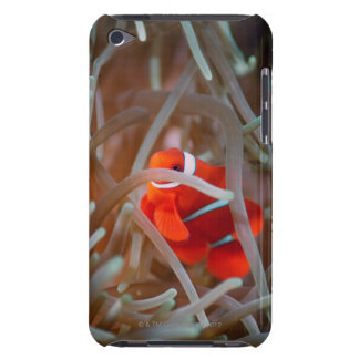 Clown anemonefish 2 barely there iPod case