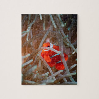 Clown anemonefish 2 jigsaw puzzle