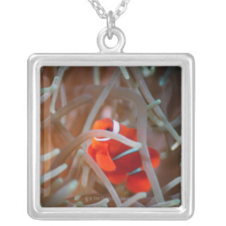 Clown anemonefish 2 silver plated necklace