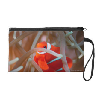 Clown anemonefish 2 wristlet