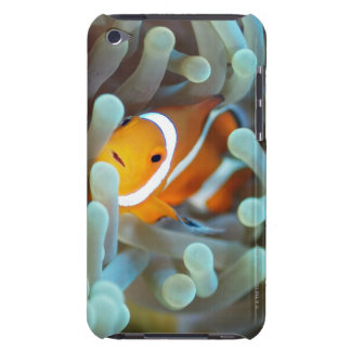 Clown anemonefish 3 barely there iPod case