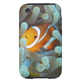 Clown anemonefish 3 iPhone 3 tough cases