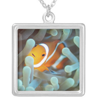 Clown anemonefish 3 silver plated necklace
