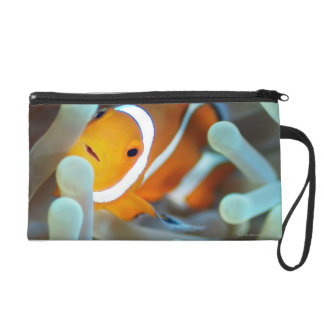 Clown anemonefish 3 wristlet