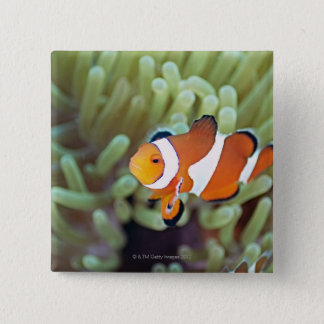 Clown anemonefish 4 15 cm square badge