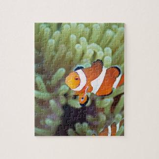 Clown anemonefish 4 puzzle
