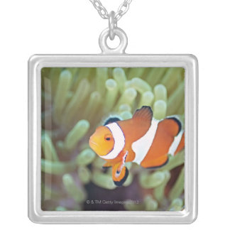 Clown anemonefish 4 silver plated necklace