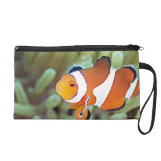 Clown anemonefish 4 wristlet clutch