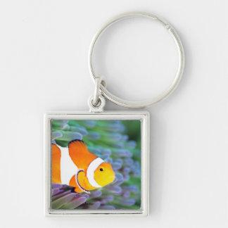 Clown anemonefish key ring