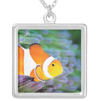 Clown anemonefish silver plated necklace