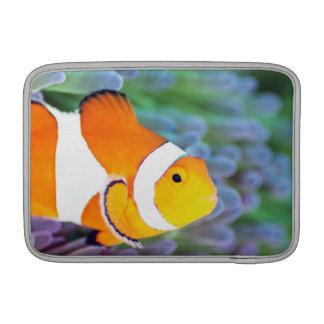 Clown anemonefish sleeve for MacBook air