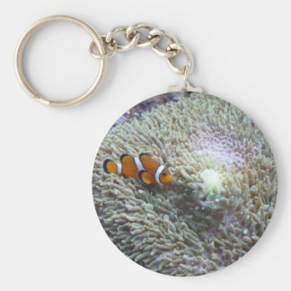 clown fish 3 basic round button key ring