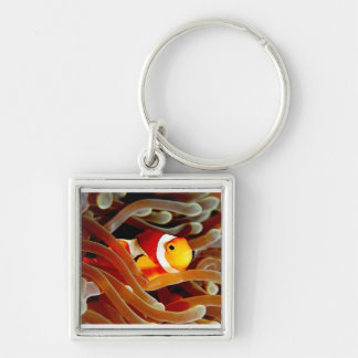 Clown fish and  bubble anemone keyring Silver-Colored square key ring