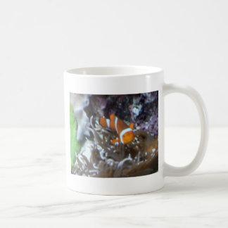 Clown Fish Basic White Mug