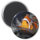 Clown-fish in anemone magnet