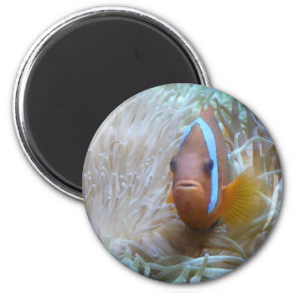 clown fish in anemone magnet
