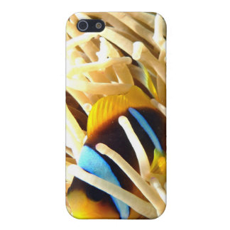 Clown Fish iPhone 5 Cover