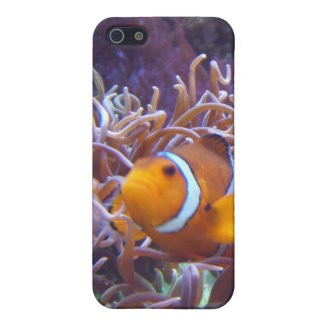 Clown fish iPhone case Cover For iPhone 5/5S