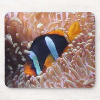 Clown Fish Mouse Mat