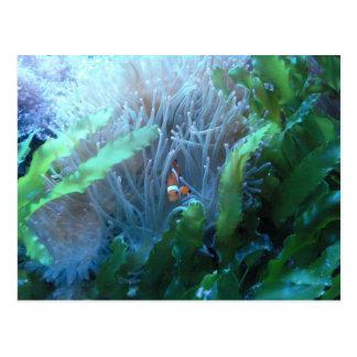 Clown Fish Postcard