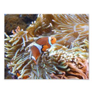 Clown Fish Print Photograph