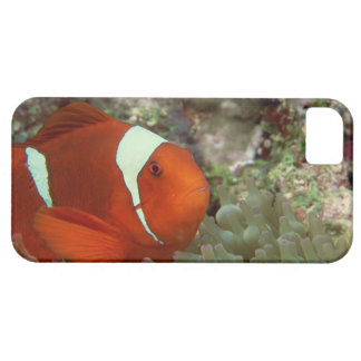 Clownfish 2 iPhone 5 cover