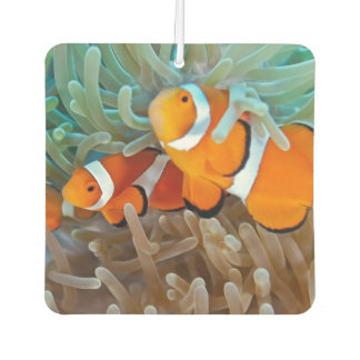 Clownfish Car Air Freshener