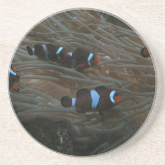 clownfish coaster