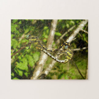 Club-tailed Dragonflies Photo Puzzle & Gift Box