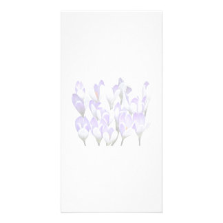 Cluster of Crocuses Photo Card