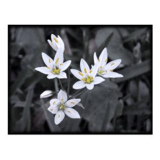 Cluster of Wildflowers Macro Photo Post card