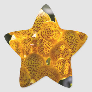 Cluster of yellow and orange orchids star stickers