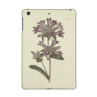 Clustered Bellflower Botanical Illustration